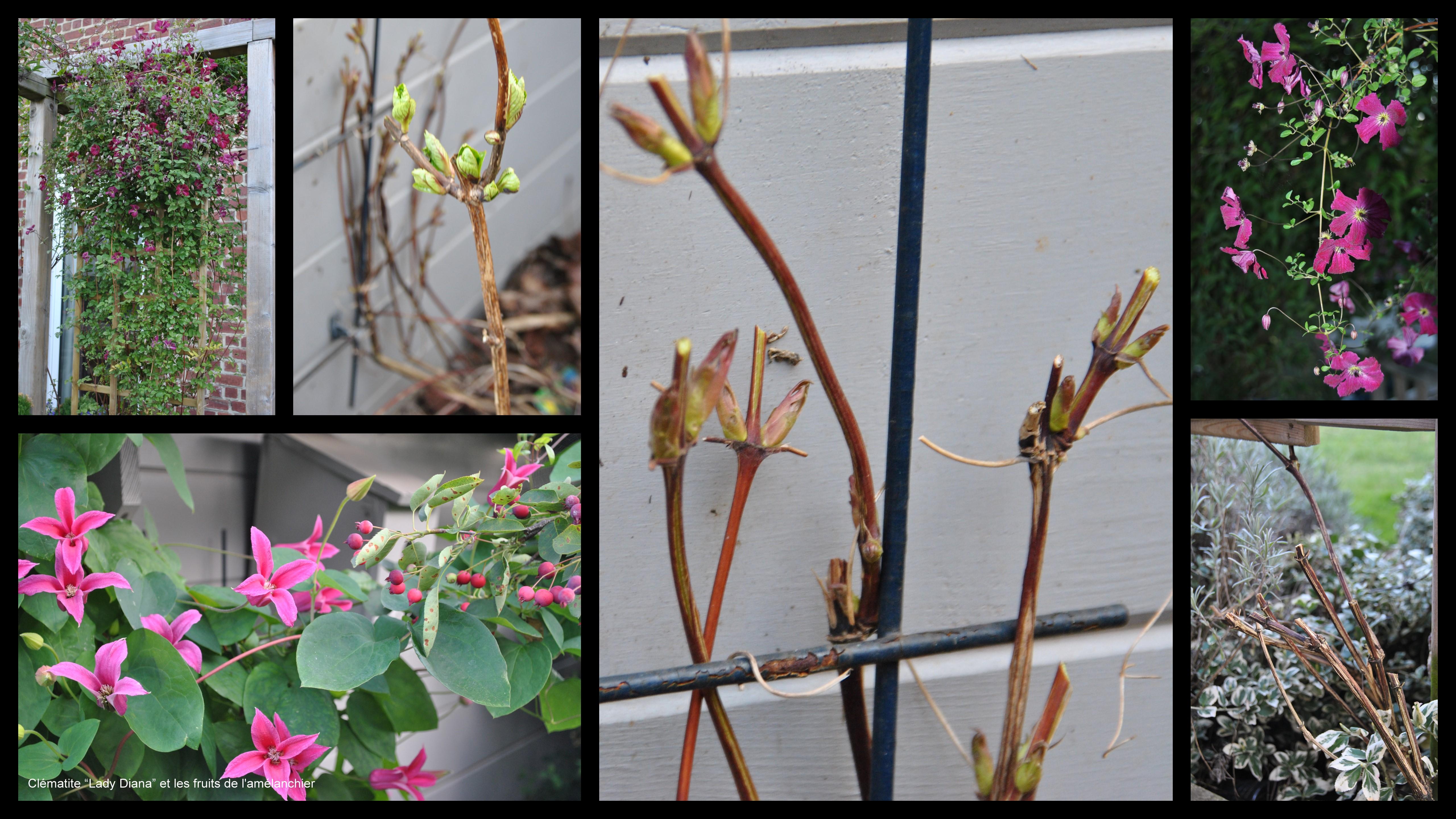 Cl matites tailler les chroniques de mon jardin - Tailler orchidee apres floraison ...