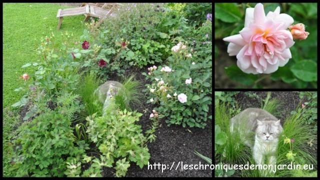 Cherchez le chat les chroniques de mon jardin - Comment eloigner les chats de mon jardin ...