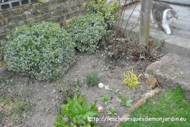 Check list les chroniques de mon jardin for Comment tailler les lavandes