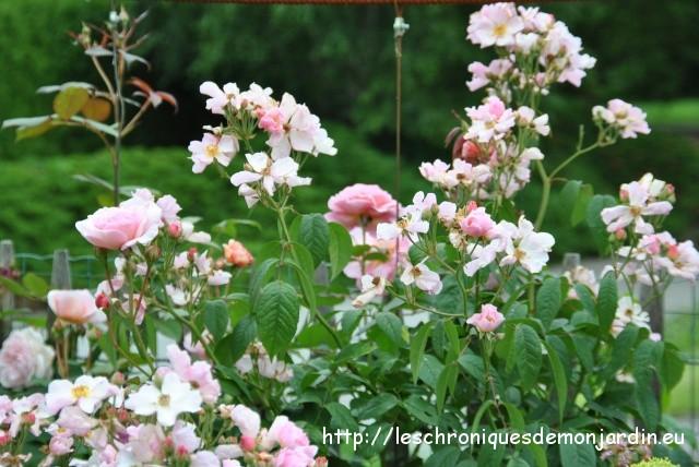 Ce jour au jardin les chroniques de mon jardin - Comment congeler des haricots verts frais du jardin ...