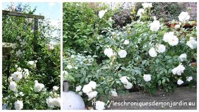 supports pour rosiers et surprise du jour les chroniques de mon jardin. Black Bedroom Furniture Sets. Home Design Ideas