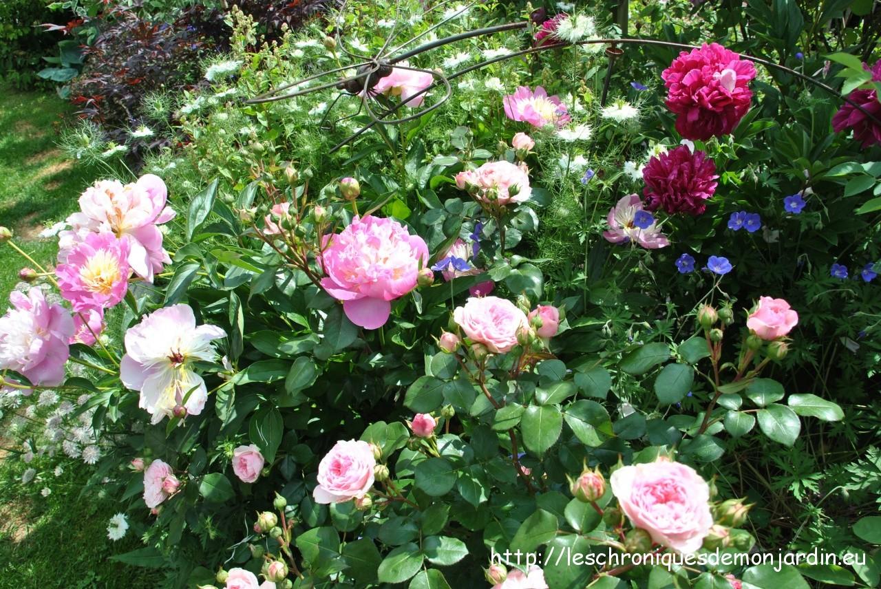Le massif mathis les chroniques de mon jardin - Comment passer en floraison ...