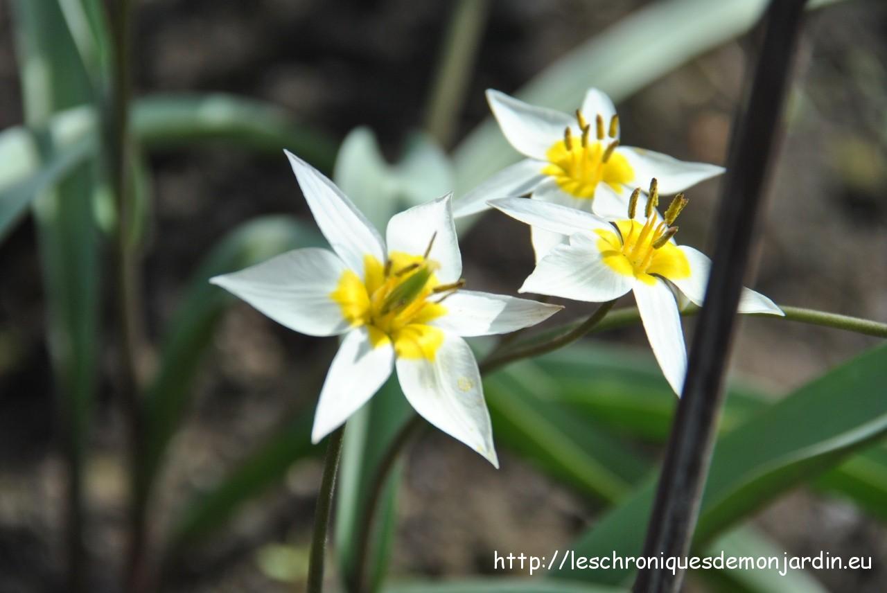 Fleur Blanche Avec Coeur Jaune Euroseconde