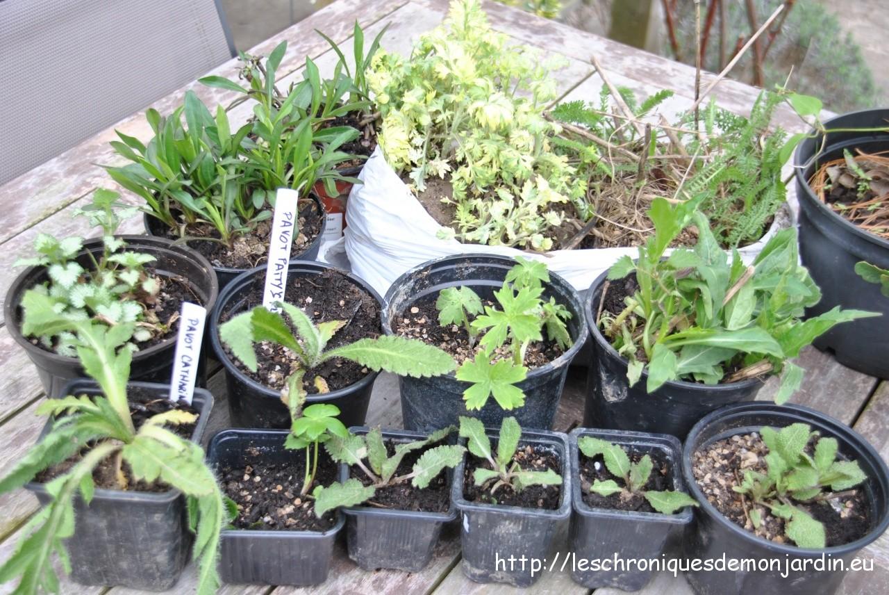 Nouvelles plantes au jardin les chroniques de mon jardin for Plante au jardin