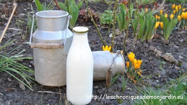 Traiter les rosiers au lait cr m les chroniques de mon - Comment cuire les petit pois du jardin ...