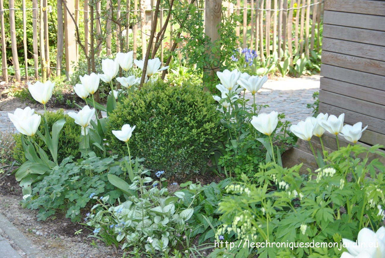 Plante pour bordure sans entretien jardin d avril les for Cherche personne pour entretien jardin
