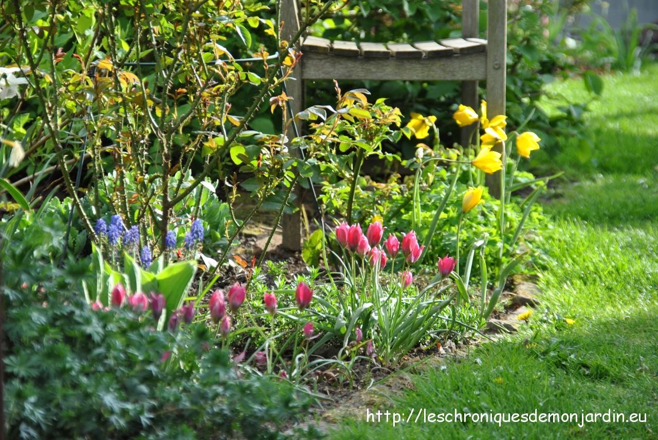 Jardin d avril les chroniques de mon jardin for D jardin
