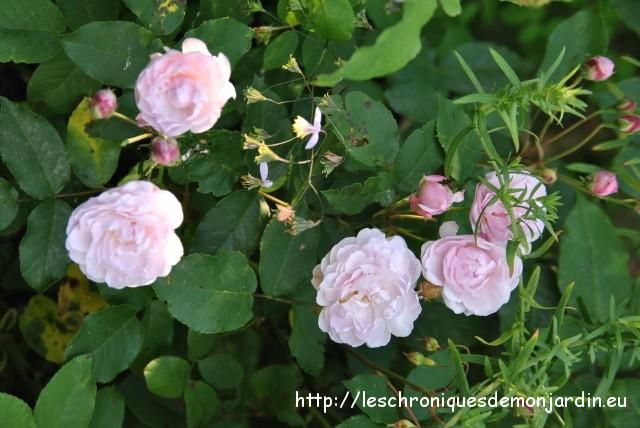 fleurs de septembre 1 les chroniques de mon jardin. Black Bedroom Furniture Sets. Home Design Ideas