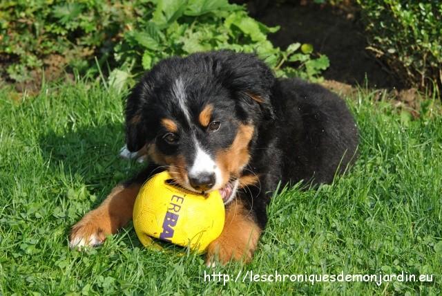 Les chroniques de mon chien: Nala joue | Les Chroniques de
